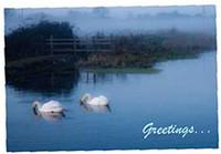 Norfolk Swan Greeting/Birthday Cards