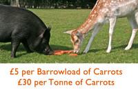 Hillside Carrot Appeal