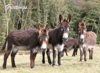 Hillside Donkey Greeting Cards