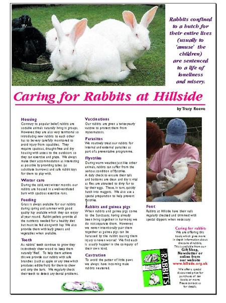 Caring for Rabbits at Hillside