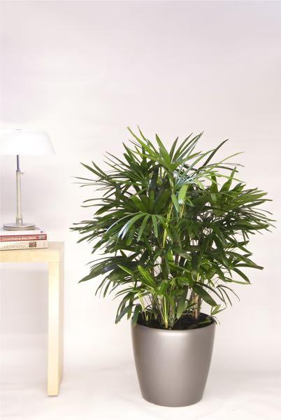Medium Plants