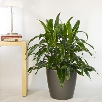 Shop by Plant Size
