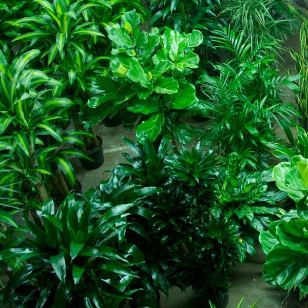 Shop For Plants Link