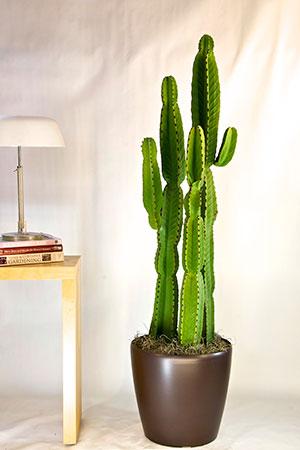 Succulents & More