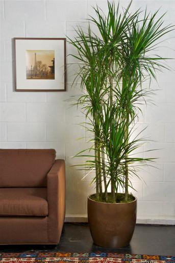 Gentil Houston Interior Plants