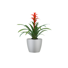Single Orange Bromeliad Combo