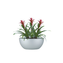 The Bromeliad Purple Guzmania Trio in Bowl