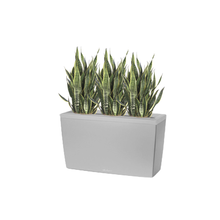 Floor Plant Container with 3 Sansevierias