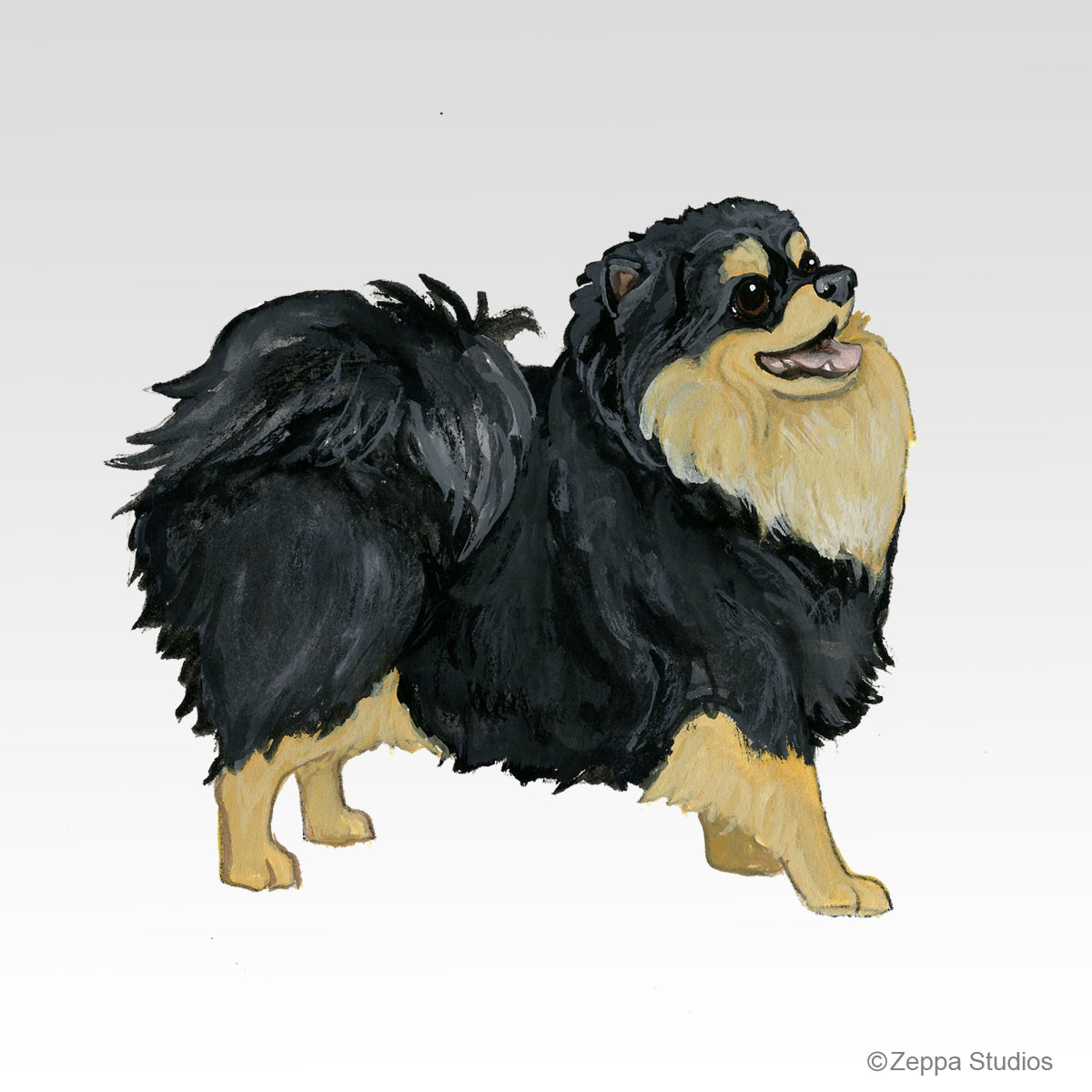 Black N Tan Pom, New Breed Design from Zeppa Studios