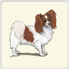 Red & White Papillon Coasters