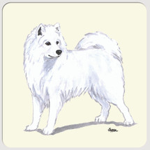 Samoyed Beverage Coasters