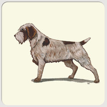 Wirehaired Pointing Griffon Beverage Coasters
