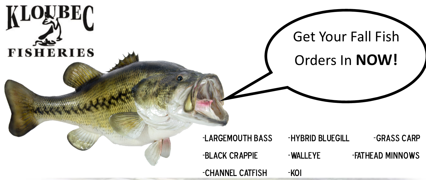 bass-pic.png