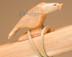 Hand Carved Fetish - Natural Eagle