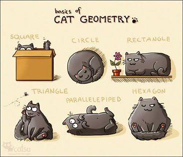 geometirc-cats.jpg