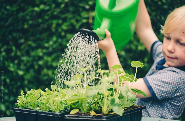Simple Steps to Reduce Your Water Consumption This Summer