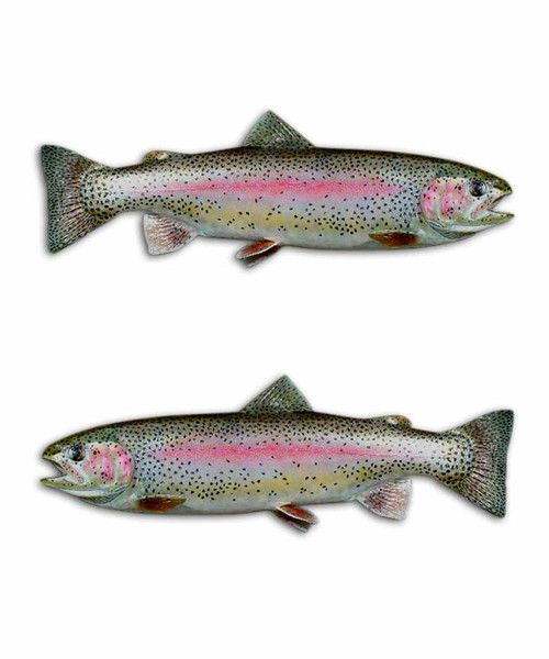 Rainbow Trout Fishing Stickers