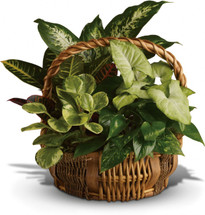 Emerald Garden Basket