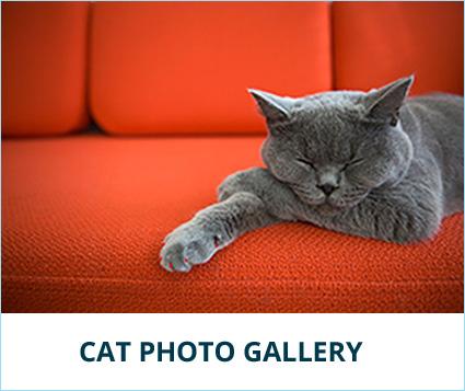 cat-gallery-banner.jpg