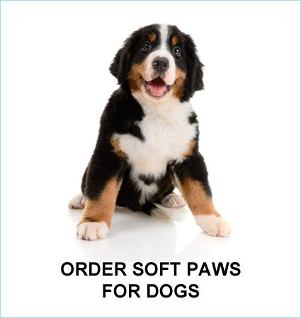 dog-que-ans.jpg