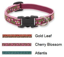 Lupine 1/2 Inch Wide Dog Collar