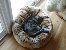 Tiger Dreamz Beddy Ball Bed (US Only)