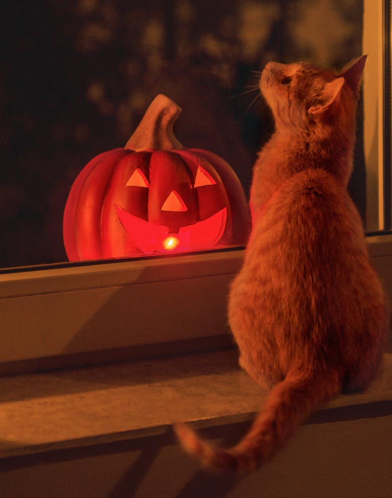 Keep your cat safe and cozy this Halloween.