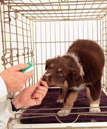 Clicker training is positive reinforcement that helps train dogs.