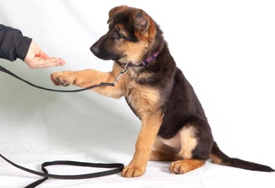 Get the most out of your dog training sessions.