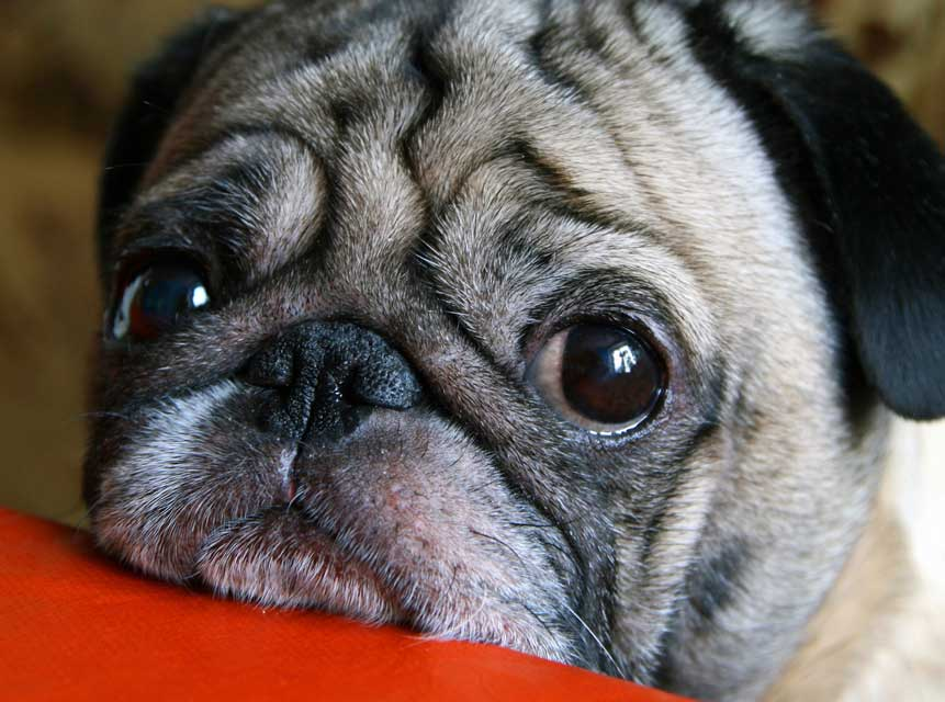 There may be a way you can help protect a dog that drags nails.