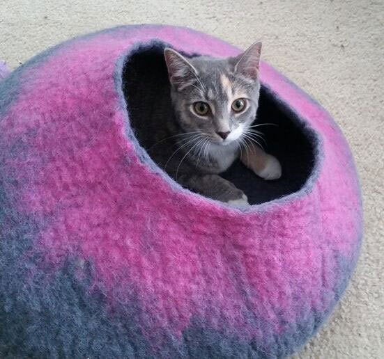 Cat in Gray and Pink Cat Cave