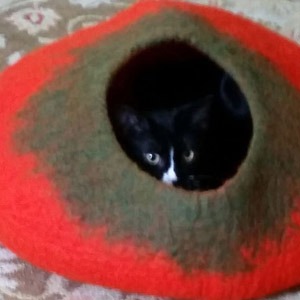 Cat in Red and Black Cat Cave