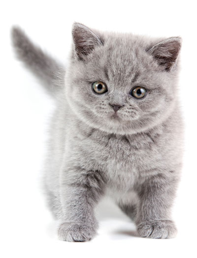 Learn the signs of ringworm in cats.