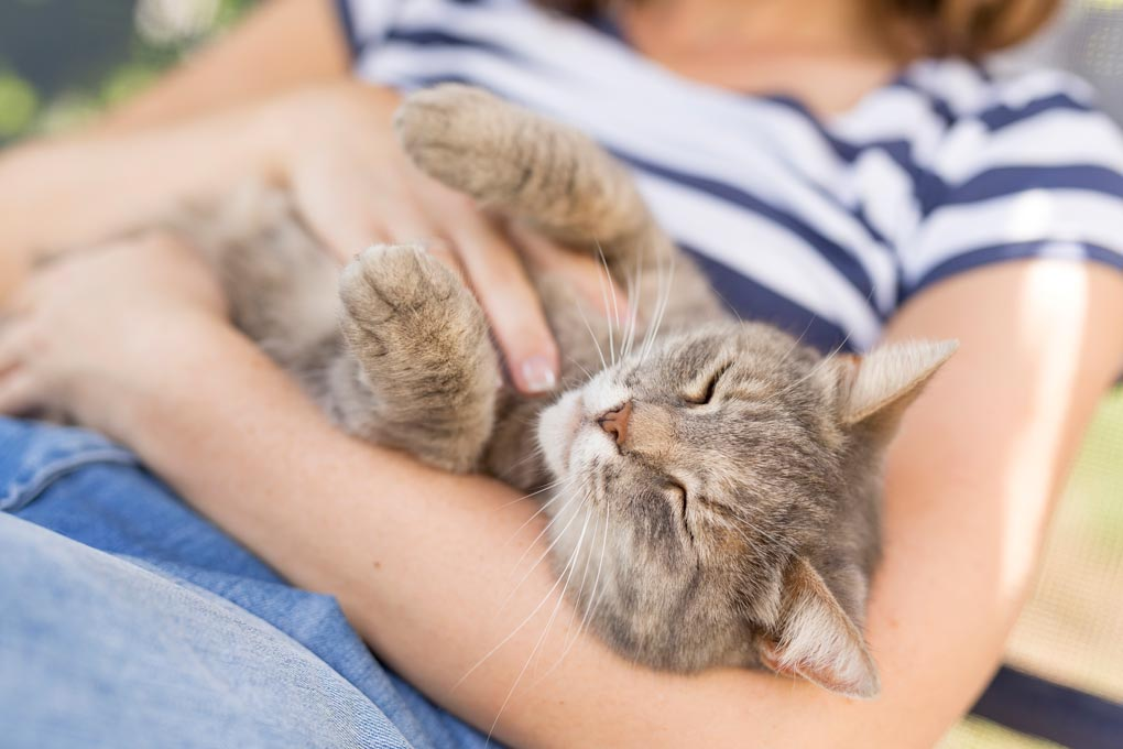 People with diabetes can use soft paws to help protect them from scratches.
