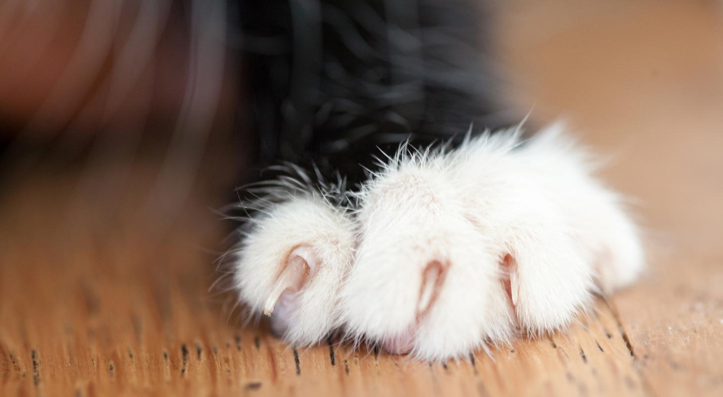 Soft Paws can help keep your walls and door frames from being damaged by your cat's claws.
