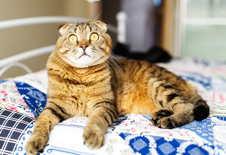 Why does your cat pee on your bed?