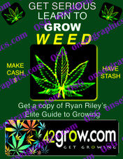 Marijuana Weed Flyer