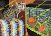 Cat Guarding Fish
