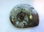 Ammonite (0440)