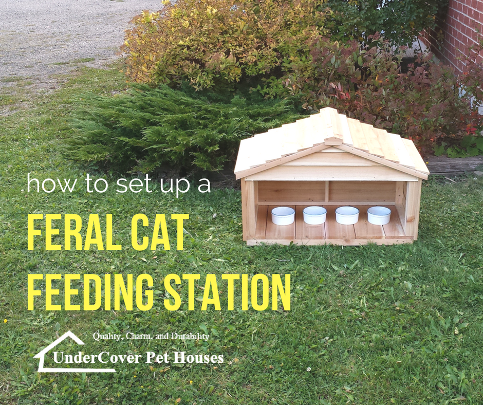 How To Set Up A Feral Cat Feeding Station Undercover Pet