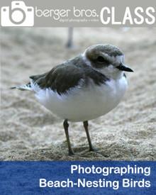 08/21/18 - Photographing Beach-Nesting Birds