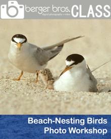 08/23/18 - Beach-Nesting Birds Photo Workshop