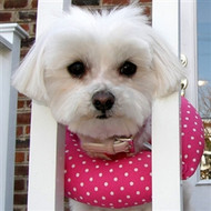 Puppy Bumpers Pink Dot