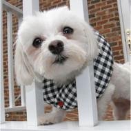 Puppy Bumper Black & White Checkers