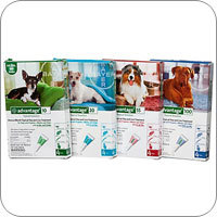 Flea and Tick Control