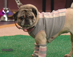 Pet Clothes Feature on Wendy Williams