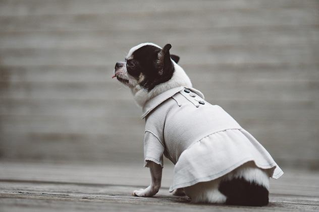 herringbone-dress-main.jpg