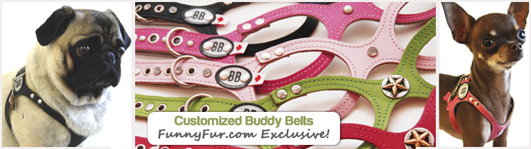 Buddy Belt