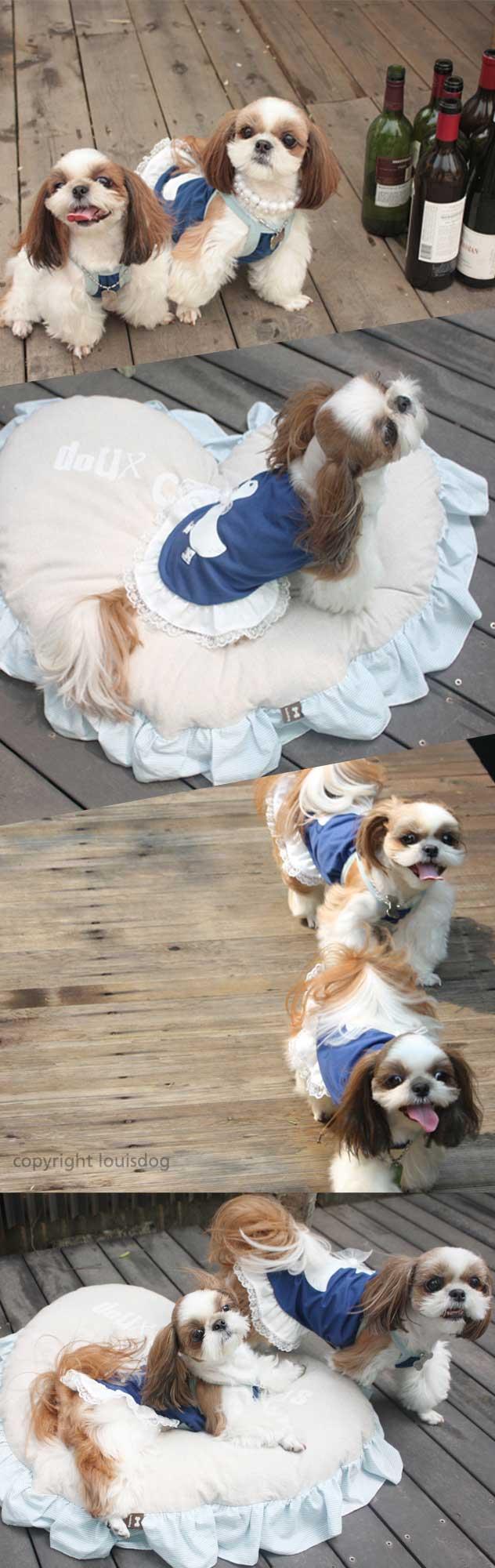 Louisdog Duckling Dance Dog Dress