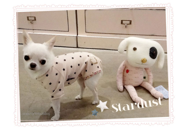 Louisdog Stars Plz Pants